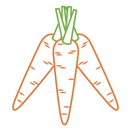 carrots vegetable fresh healthy food vector illustration