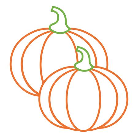 two pumpkin vegetable vegetarian diet vector illustration