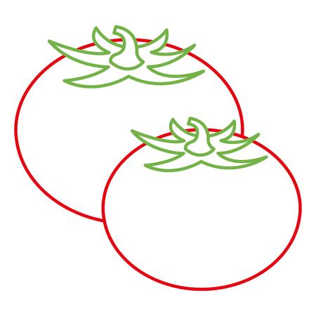 pair tomato vegetables fresh food vector illustration Illustration