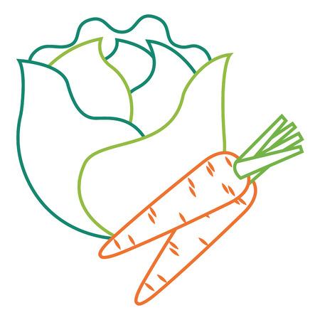 lettuce and carrots vegetables fresh food vector illustration Stock Vector - 93531330