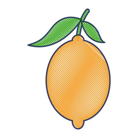 fresh citrus fruits whole and leaves lemon vector illustration draw design