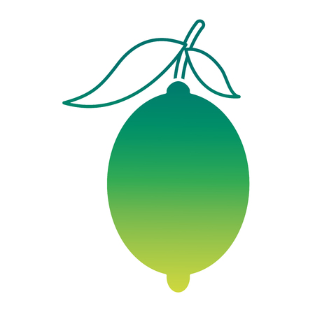 fresh citrus fruits whole and leaves lemon vector illustration green design