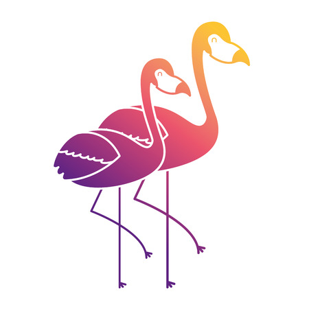 two pink flamingo bird exotic image vector illustration