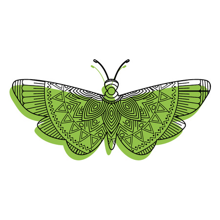 Hand drawn for adult coloring pages with moth bug, zentangle vector illustration