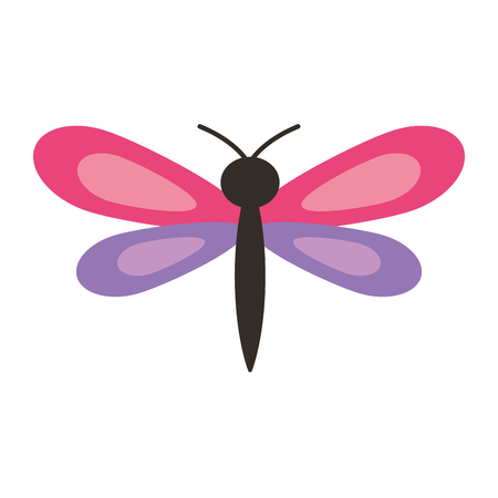 pink and purple dragonfly insect spring season vector illustration Vettoriali
