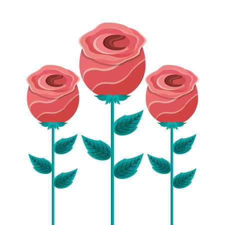 decoration three rose stem petal flower leaf botanical vector illustration 일러스트