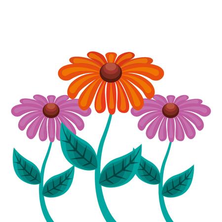 decoration three daisy stem petal flower leaf botanical vector illustration