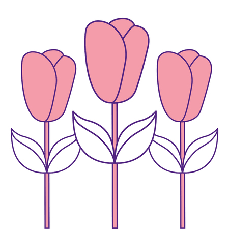 decoration three stem petal flower leaf botanical vector illustration pink image design