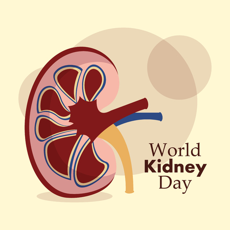 world kidney day greeting card healthy vector illustration