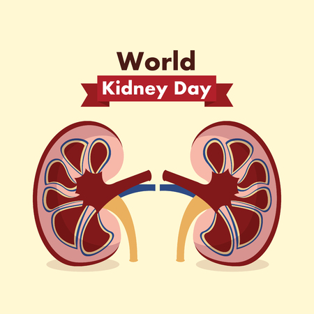 world kidney day healthcare medical campaign poster vector illustration