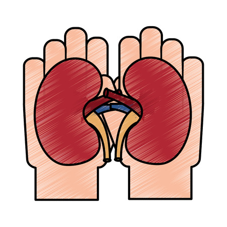 hands holding kidneys health support campaign vector illustration drawing design
