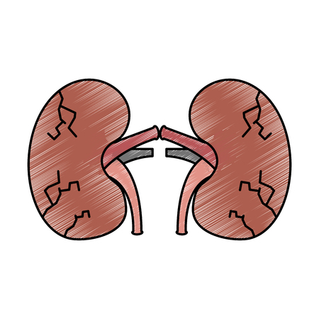 Reins poumons humaine humaine médicale dessin vectoriel grungy conception illustration grungy Banque d'images - 95145021