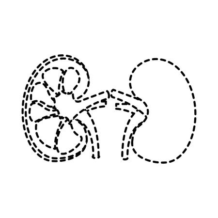 human organs kidney anatomy medical icon vector illustration sticker design Illustration