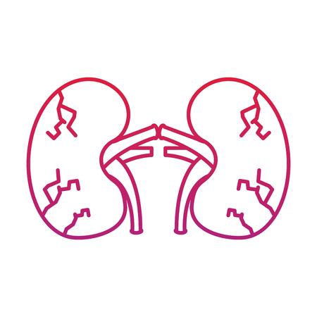 Reins humaine politique humaine anatomique vecteur illustration vintage ligne rouge dégradé de couleur Banque d'images - 95147158