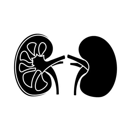 órganos humanos anatomía médica anatomía icono vector ilustración