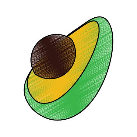 half fresh avocado fruit exotic oraganic vector illustration drawing image Çizim