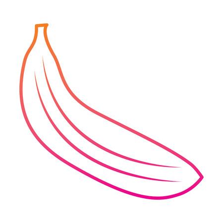 tropical fruit tasty banana fresh vector illustration red degraded line image Illustration