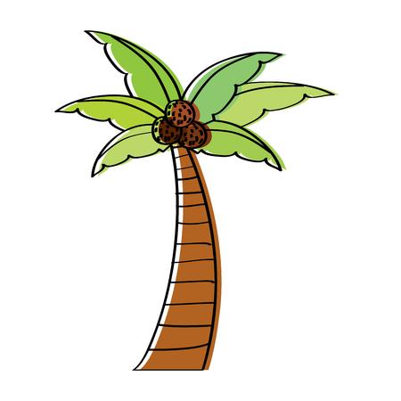 palm coconut plant tree beach flora vector illustration