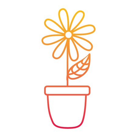 Potted daisy flower petal leaves decoration vector illustration degraded line color design.