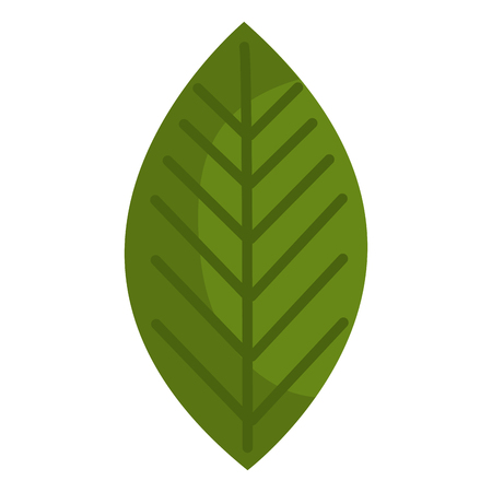 leaf plant isolated icon vector illustration design Illustration