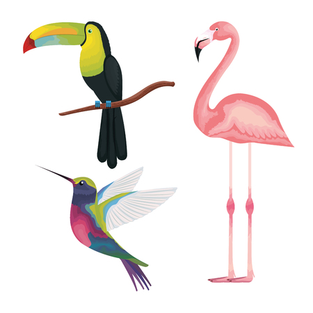 tropical and exotics birds vector illustration design