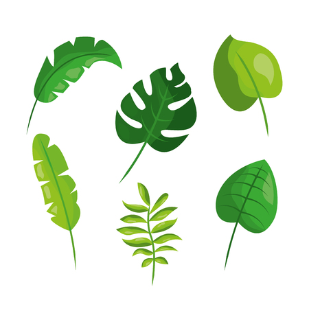 tropical leaves foliage frond plant botanical vector illustration