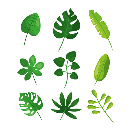Tropical leaves foliage frond plant botanical vector illustration Illustration