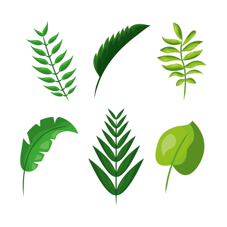 Tropical leaves  vector illustration