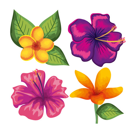 Tropical and exotics flowers and leaves vector illustration design