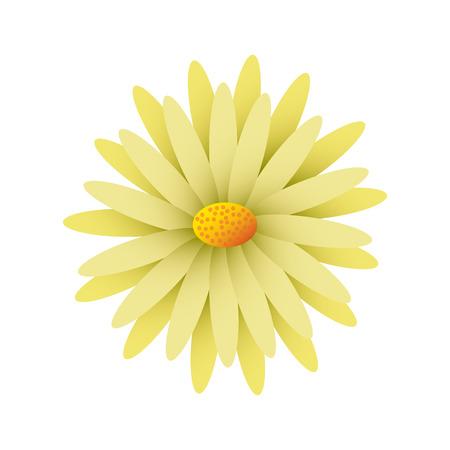 美しい自然の花デイジー花びらの装飾ベクトルイラスト