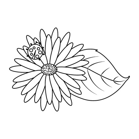 flower daisy ladybug and leaves decoration natural vector illustration