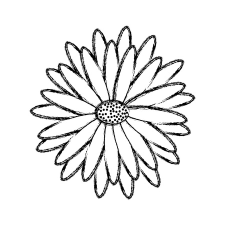 Beautiful natural flower daisy petals decoration vector illustration sketch design.