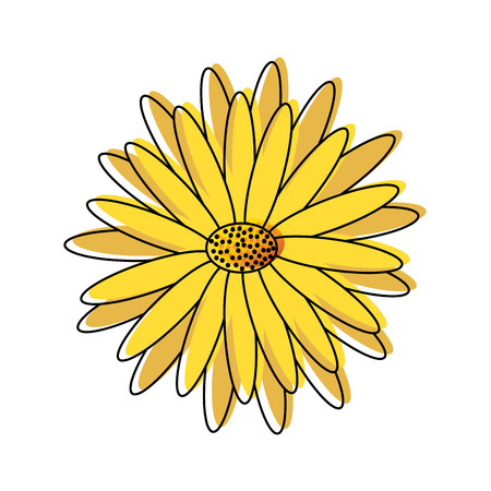 beautiful natural flower daisy petals decoration vector illustration