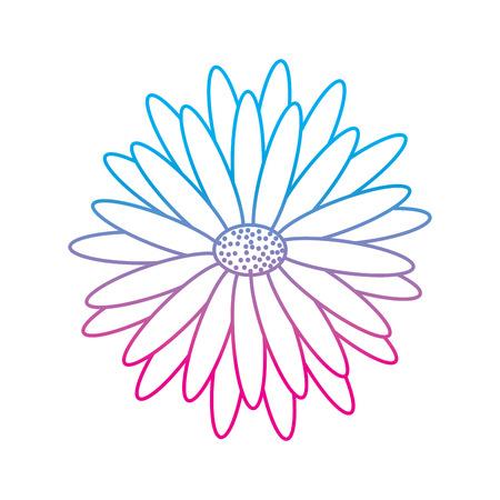 beautiful natural flower daisy petals decoration vector illustration degrade color line image