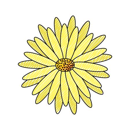 beautiful natural flower daisy petals decoration vector illustration