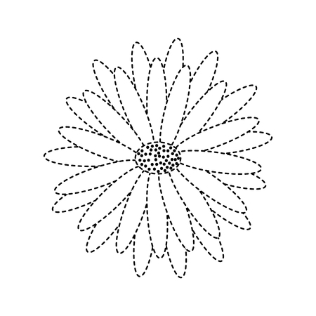 Beautiful natural flower daisy petals decoration vector illustration dotted line image.
