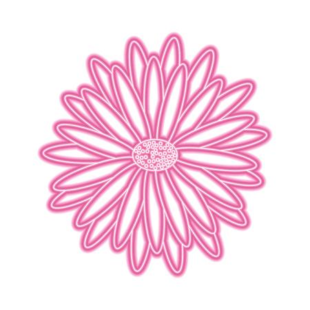 beautiful natural flower daisy petals decoration vector illustration pink neon image