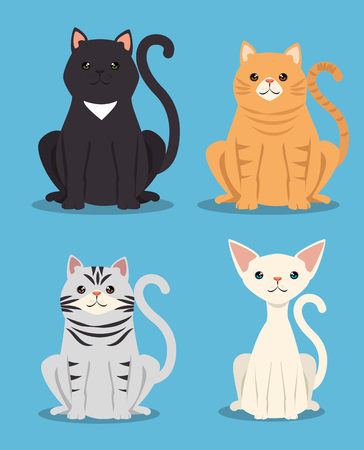 cute cats pets friendly vector illustration design