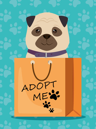 dog in paper bag pet friendly vector illustration design