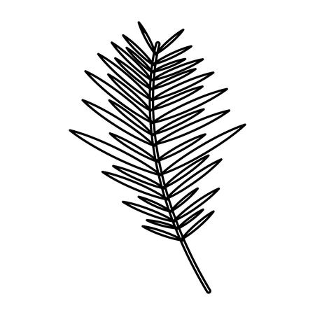 branch palm leaves frond natural vector illustration outline design
