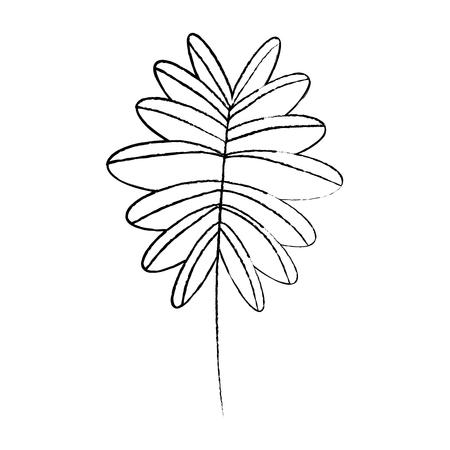 枝の手のひらの葉フロンド自然ベクトルイラストスケッチデザイン