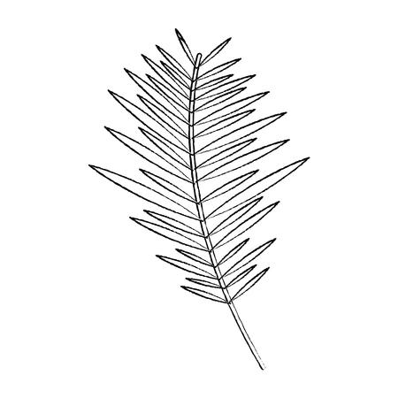 branch palm leaves frond natural vector illustration sketch design Illustration