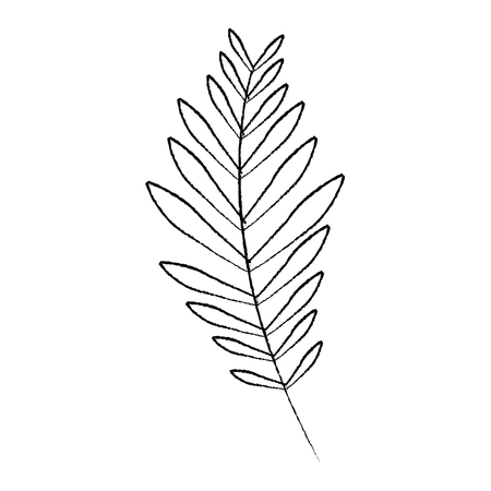 branch palm leaves frond natural vector illustration sketch design Illusztráció