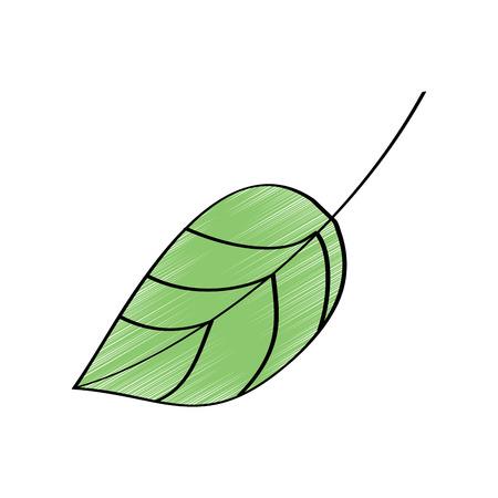 葉の葉植物のフロンド自然アイコンベクトルイラスト図面デザインカラー  イラスト・ベクター素材