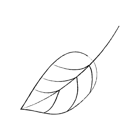 Leaf foliage botany frond natural icon vector illustration sketch design.