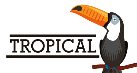 Tropical toucan bird animal on branch white background vector illustration