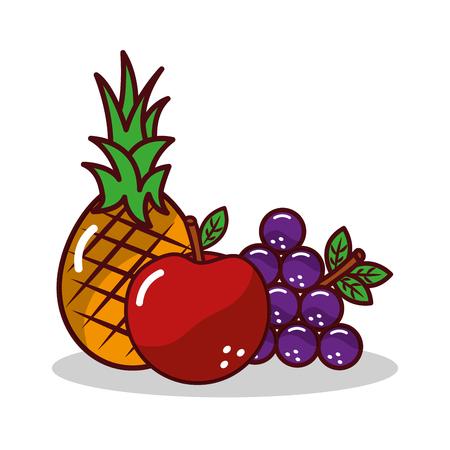 fruit pineapplee grapes apple harvest vector illustration