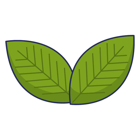 Leafs plant ecology icon vector illustration design.