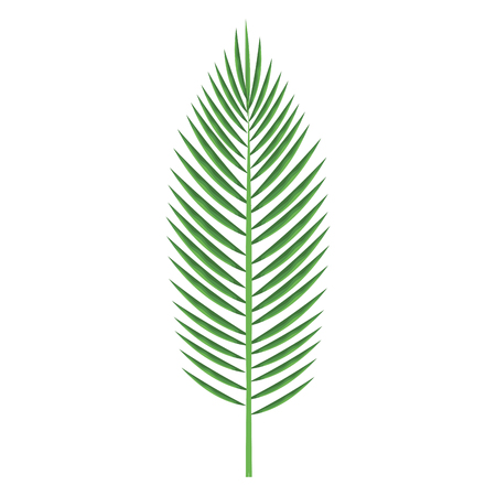 tropical leaf palm icon vector illustration design