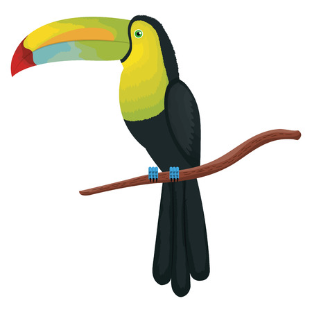 tropical and exotic toucan vector illustration design